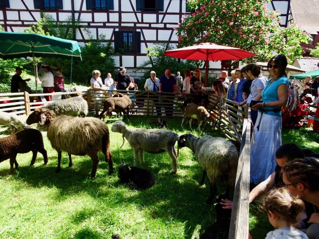 Hirtenmuseum  Schaf-Fest
