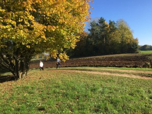 Herbst oberhalb Oberkrumbach